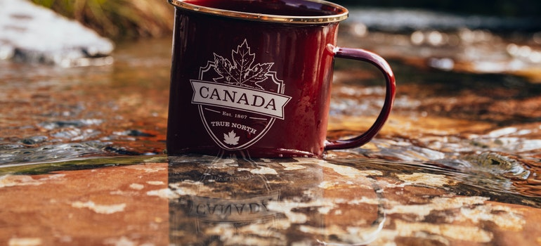 Canada cup in nature
